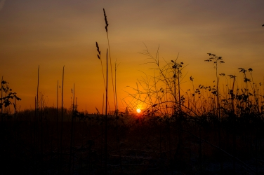 Sonnenaufgang im Grass