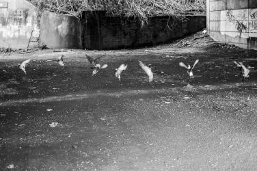 Taubenflucht