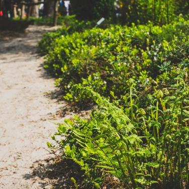 Natürlicher Kräutergarten