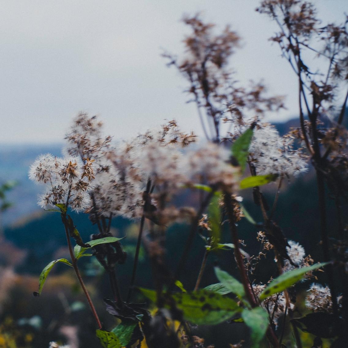 Waldspaziergang-009