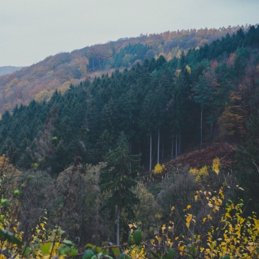 Waldspaziergang-012
